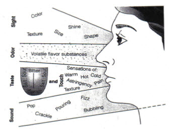 Role of five senses in sensory evaluation